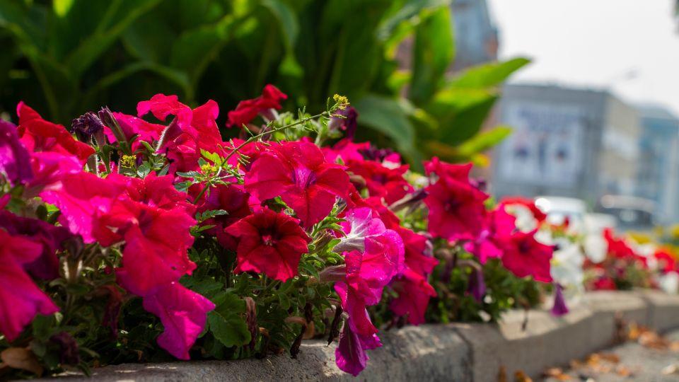 Цветы. Погода. Тепло