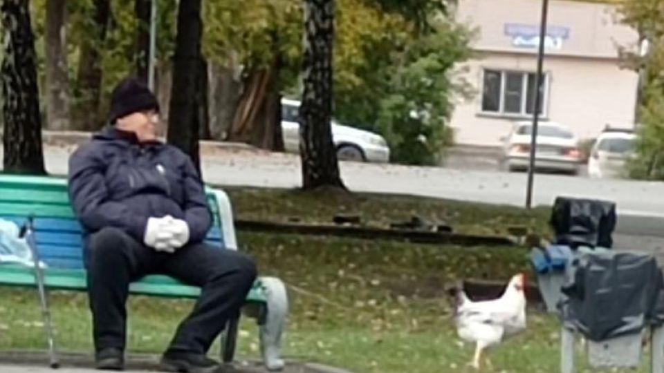 Мужчина и курица