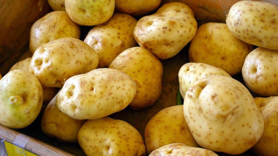 Картофель. Урожай