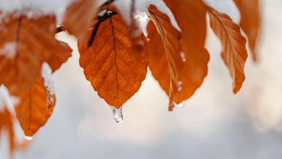 Сентябрь. Первый снег. Осень
