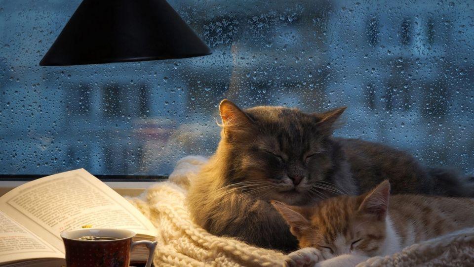 Дом. Тепло. Уют. Кошка
