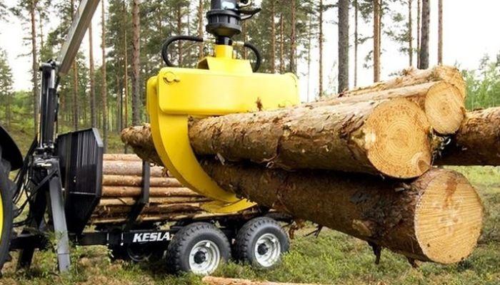 Контроль за вырубкой леса ужесточат в России