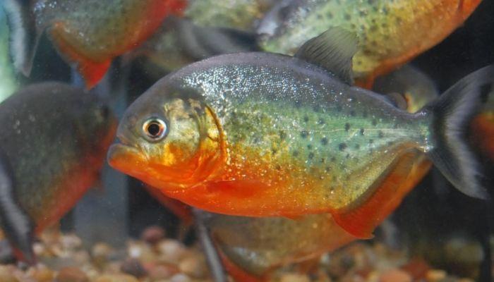 Самую древнюю хищную рыбу нашли в Германии
