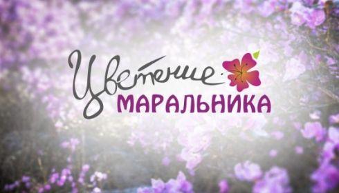 Праздники Цветение маральника и Алтайская зимовка получили Нацпремии