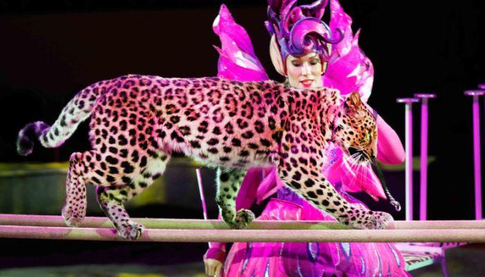 Леопард напал на ребенка в цирке на Цветном бульваре