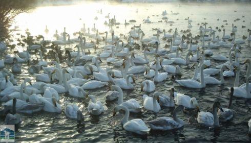 Как жителям края посетить экскурсию на лебединые озера?
