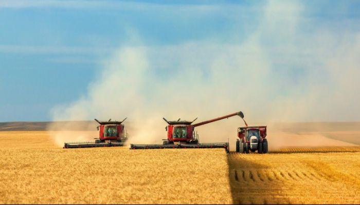 Рекордный за последние 40 лет урожай собран в 2018 году в Алтайском крае