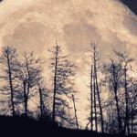 Суперлуние в фотообъективе жителей Алтайского края