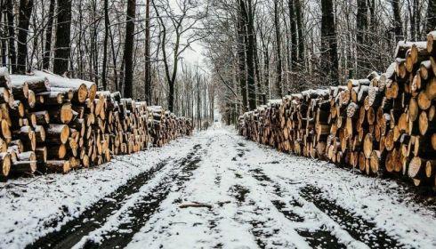 Кто и как будет восстанавливать лес в Алтайском крае