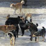 Всем наплевать? Как журналист ТОЛКа пытался пообщаться со службой отлова собак