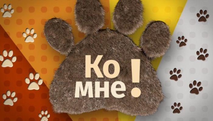 Ко мне!: Мимиша ищет хозяина