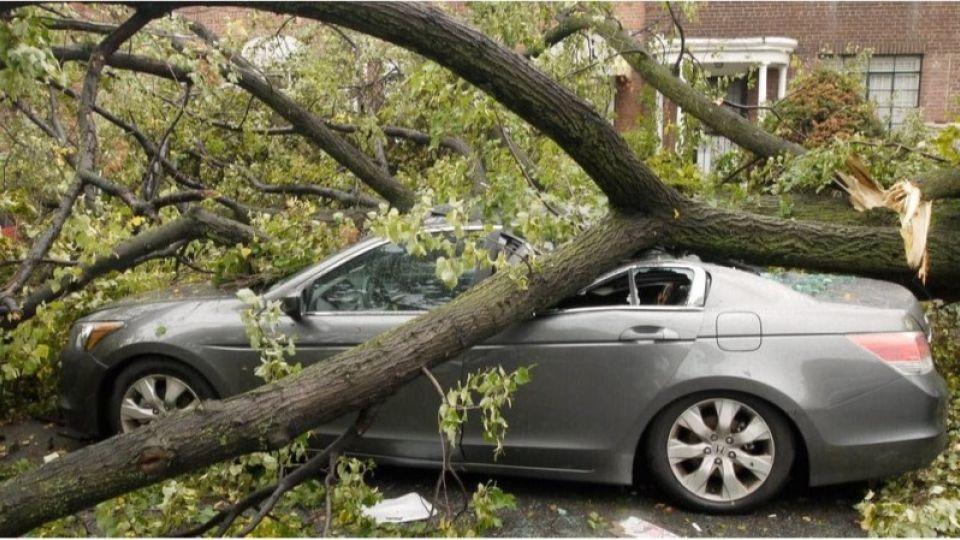 Что делать, если дерево упало на машину или балкон и кто за это заплатит?