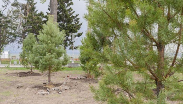 Молодые деревья высадили в Нагорном парке Барнаула