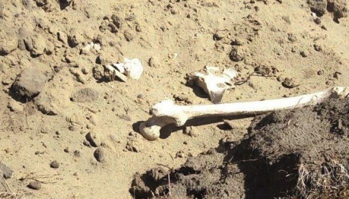 Четыре скелетированных трупа без голов найдены на берегу алтайского озера