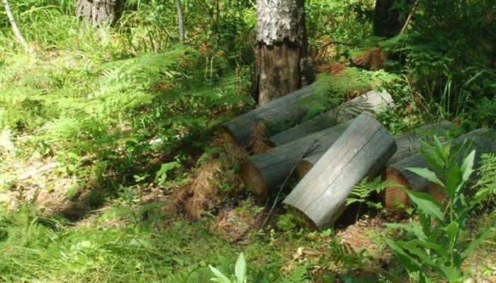 Разбираемся, насколько законна вырубка леса в Троицком районе