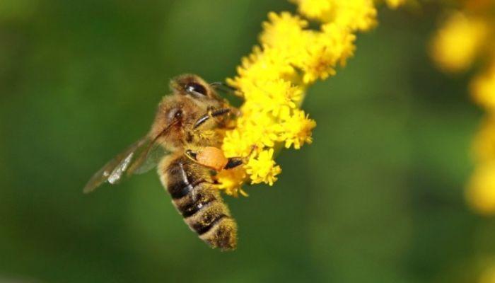 Россельхознадзор назвал причину массовой гибели пчел