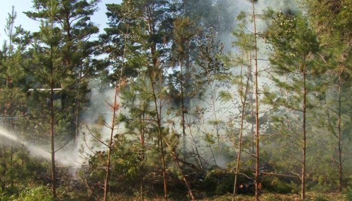 Алтайские спасатели потушили сухой сосновый лес