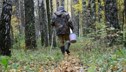 Как не заблудиться в лесу и что делать, если вы поняли, что потерялись?