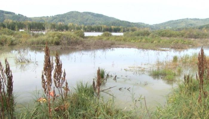 Флора и фауна озера Манжерок оказались на грани исчезновения из-за очистки
