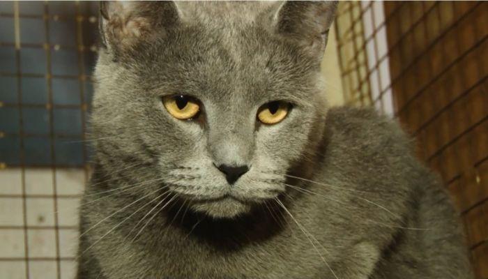 Ко мне!: ласковый кот Морсик ищет хозяина