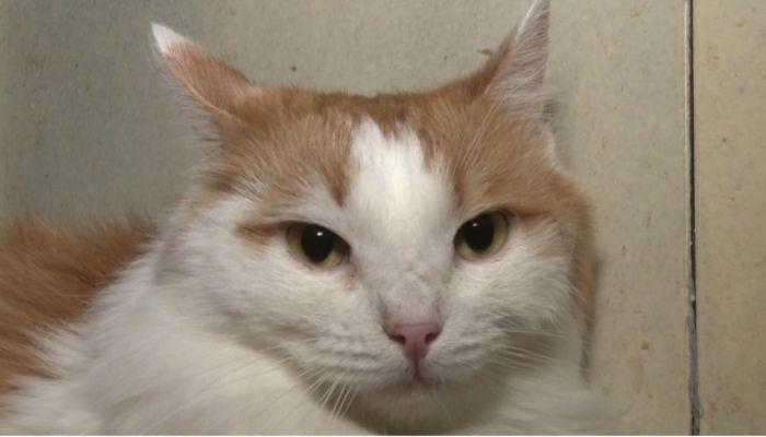 Ко мне!: как избежать стресса и адаптировать кота к новому дому