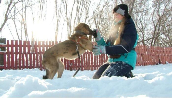 Ко мне!: ездовой спорт на Алтае