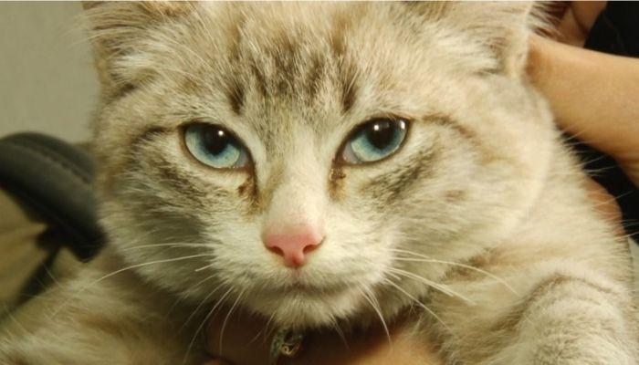 Ко мне!: чем опасны обморожения у животных и как спасли кошку Вонни