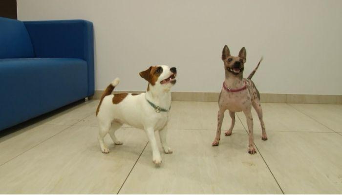 Ко мне!: что такое канистерапия и как выбрать собаку для лечения
