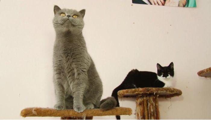 Ко мне!: как выбрать котёнка и правильно воспитывать