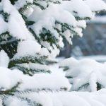 Ледяной ветер и снег: на Алтае похолодает уже 29 января