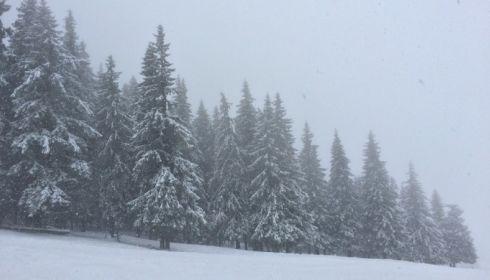Утопают в снегу. Режим чрезвычайной ситуации введен в трех районах края