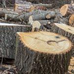 А посадит дядя. Минспортане хочет восстанавливать деревья в парке