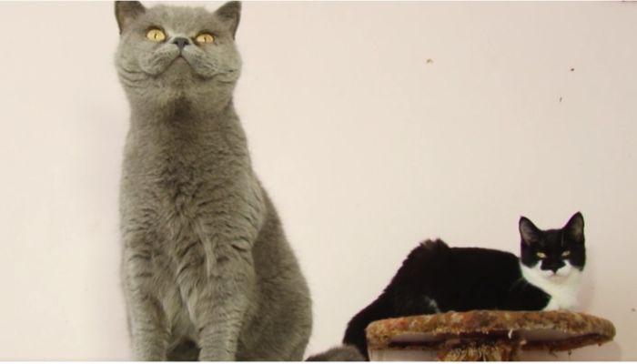 Ко Мне!: особенности стрижки когтей у котов