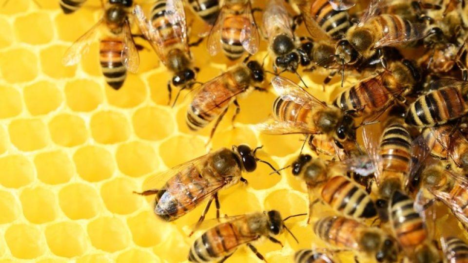 17 алтайских фермеров накажут предупреждением за массовую гибель пчел летом-2019