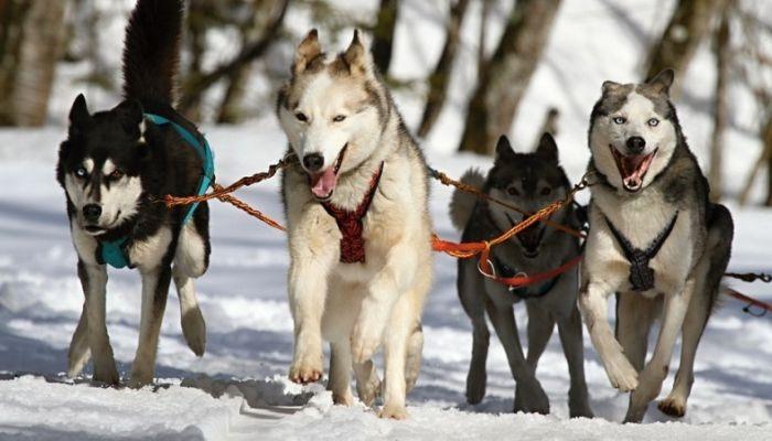 Стая бродячих собак съела мужчину в Москве
