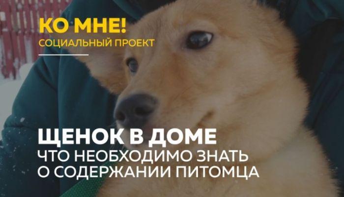 Ко мне!: как подготовить дом к появлению щенка