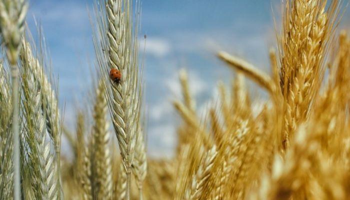 Китайцы выкупили 2 тысячи га сельхозземли в Алтайском крае