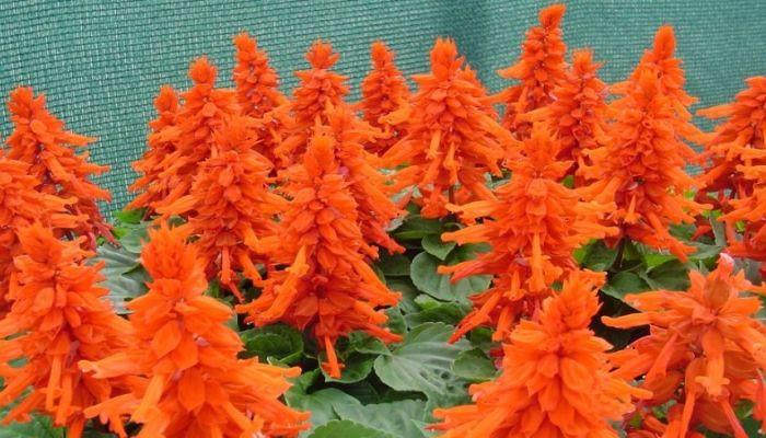 Мэрия Барнаула закупит 90 тысяч цветов для городских клумб