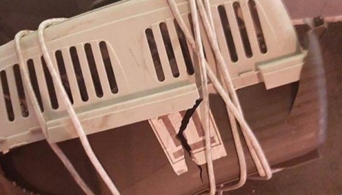 Гибель кошек в самолете Аэрофлота связали с ветром