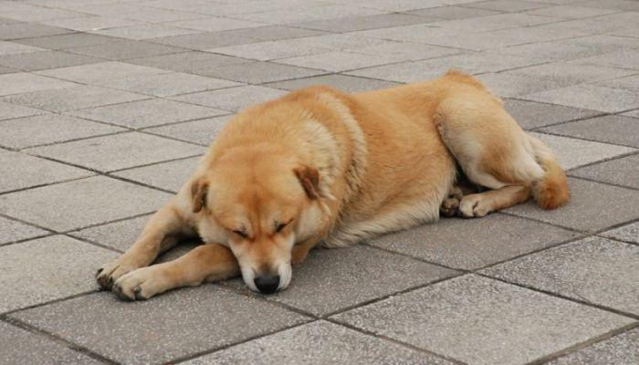 Собака бывает кусачей: правила содержания животных в приютах утвердили в крае