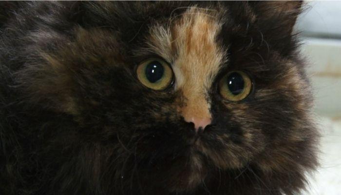 Ко мне!: как лечить кошачий кальцивироз и что это за инфекция