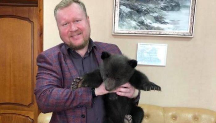 Три медвежонка подрастают в барнаульском санатории