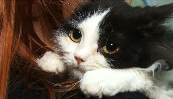 Ко мне!: всё, что нужно знать о вакцинации кошек