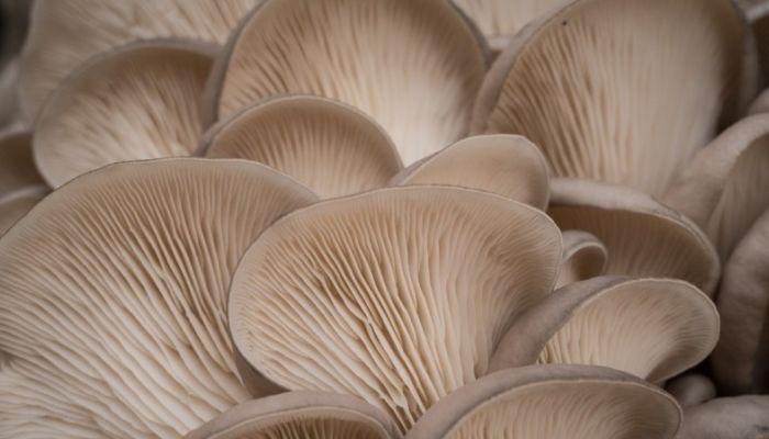 На Алтае появится грибная ферма