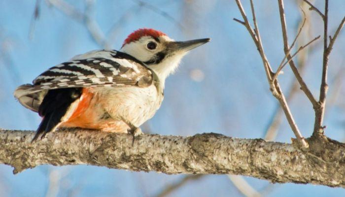 Красивые и грациозные: фотоподборка прекрасных птиц Алтая
