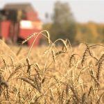 Коронавирус не помешал алтайским аграриям приступить к посевной