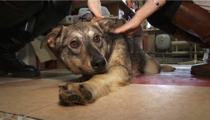 Ко мне!: какие опасные болезни преследуют собак