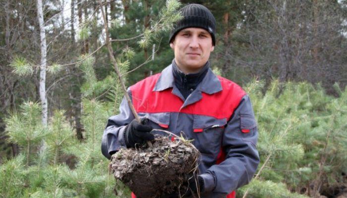 Более миллиона деревьев высадят на Алтае в память о погибших солдатах