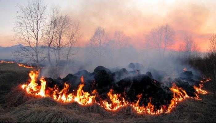 Около 800 ландшафтных пожаров полыхают в Алтайском крае на 22 апреля