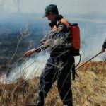 Машины стоят: лесополоса загорелась возле трассы в Алтайском крае